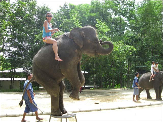 Da-prikolno-za-UE-prokatitsya-na-slone