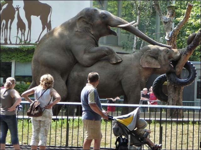 U-slonov-svoi-zabavi