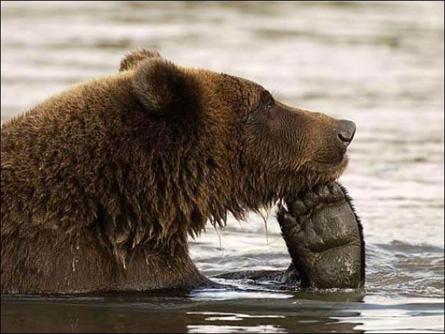 Da-prizadumalsya-medved