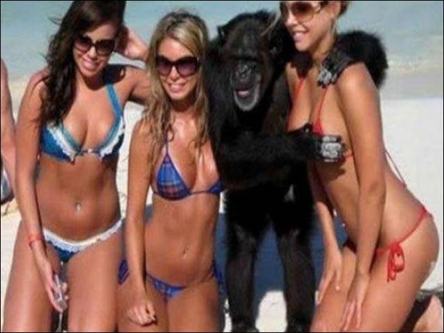 Tri-krasavitsi-i-gorilla